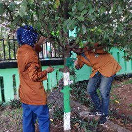 Mahasiswa Pendidikan Biologi Laksanakan Pelabelan Tanaman di SMA N Jumapolo Karanganyar